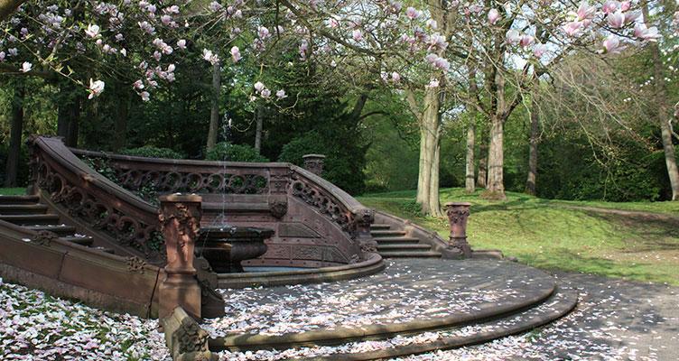 Friedhof Ohlsdorf Magnolienblüte